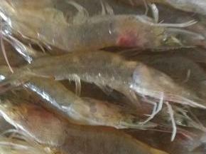 明虾用清水冲洗干净,剪掉虾须。剪开背部,挑去虾线。控干水分备用