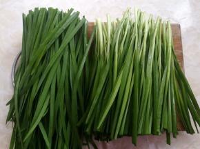 韭菜切掉尾部过长的部分,只用带根部的韭菜